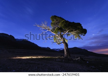 night photography,  old pine tree in the national park of Sierra de Maria-Los Velez in Almeria, Spain - stock photo