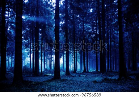 Night scene of autumn forest in Thuringia, Germany - stock photo
