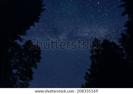 Night sky with lot of shiny stars, silhouette of trees are at front - stock photo