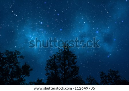Night sky with trees - stock photo