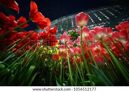 https://thumb7.shutterstock.com/display_pic_with_logo/167494286/1056512177/stock-photo-night-tulip-at-tokyo-1056512177.jpg