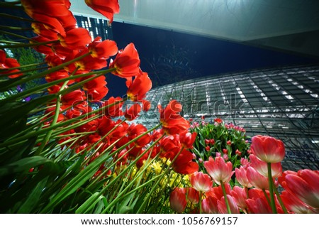https://thumb7.shutterstock.com/display_pic_with_logo/167494286/1056769157/stock-photo-night-tulip-at-tokyo-1056769157.jpg