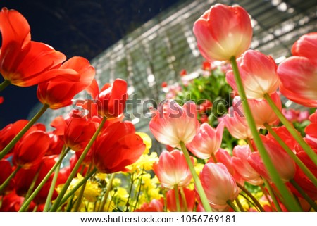 https://thumb7.shutterstock.com/display_pic_with_logo/167494286/1056769181/stock-photo-night-tulip-at-tokyo-1056769181.jpg