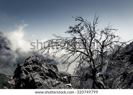 Nightmare trees - stock photo