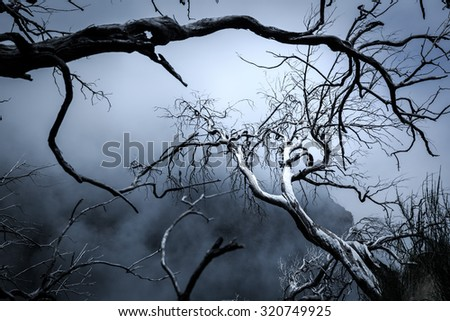 Nightmare trees - stock photo
