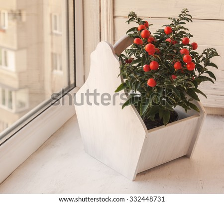 Nightshade (Solanum pseudocapsicum) with red fruits  on a window - stock photo