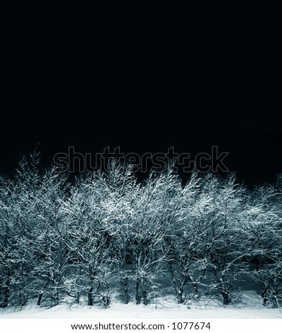 Nightshot of trees covered in snow