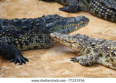 Nile crocodile with its baby - stock photo