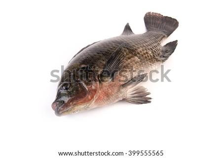 Nile tilapia fish  on white background - stock photo
