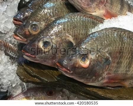 Nile tilapia or Mango fish - stock photo