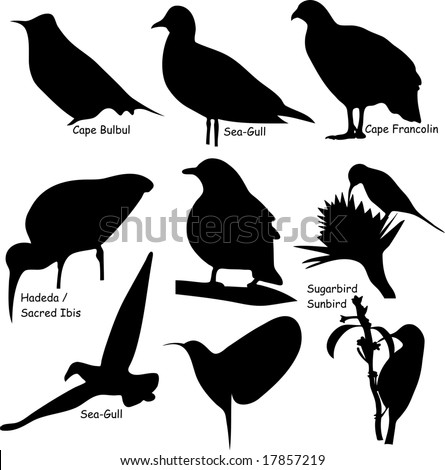 Nine accurate bird shapes