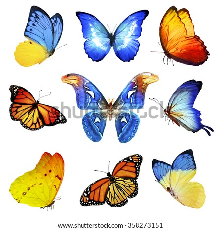 Nine blue orange yellow butterflies on white background - stock photo