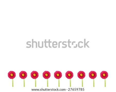 nine daisies - stock photo