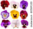 Nine different Pansies isolated on a white background - stock photo
