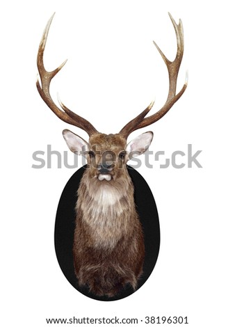 Nine Point Mounted Stag's Head isolated with clipping path - stock photo