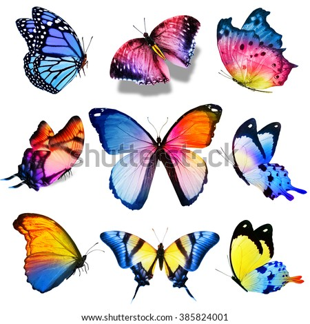 Nine violet blue pink yellow butterflies on white background - stock photo