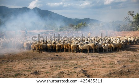 Ninh Thuan, Vietnam, October 12, 2015 rural people Ninh Thuan, Vietnam, raising sheep