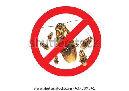 No More Group Cockroach icon ,Sign and dead of a cockroach,Isolated on a white background - stock photo