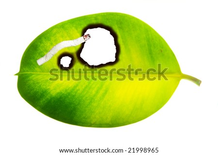 No smoking concept illustrated by cigarette burned hole in green leaf isolated on white background - stock photo