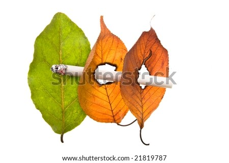 No smoking concept illustrated by cigarette burned holes in leaves isolated on white background - stock photo