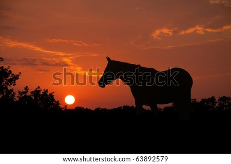 Noble Arabian horse silhouette against sunset skies on a humid night producing rich red and orange colors - stock photo