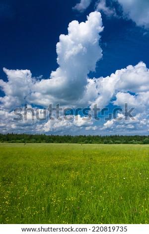 Nobody Outside Grass Lawn  - stock photo