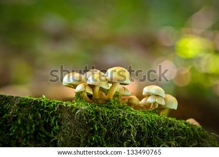 Non-edible mushrooms on an old fallen tree - stock photo