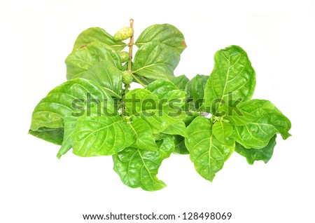Noni - stock photo