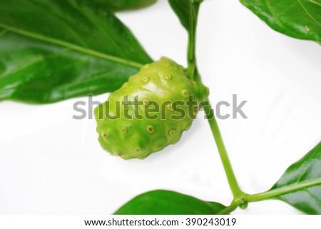 Noni Fruit - stock photo
