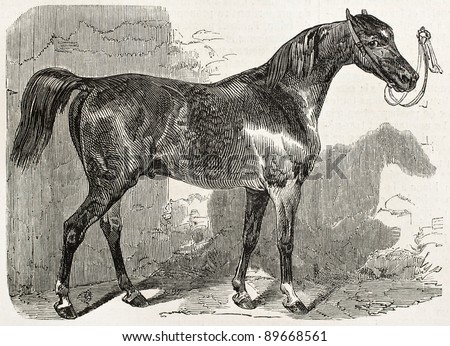 Norman horse in 1852, old illustration. By unidentified author, published on L'Illustration, Journal Universel, Paris, 1858 - stock photo