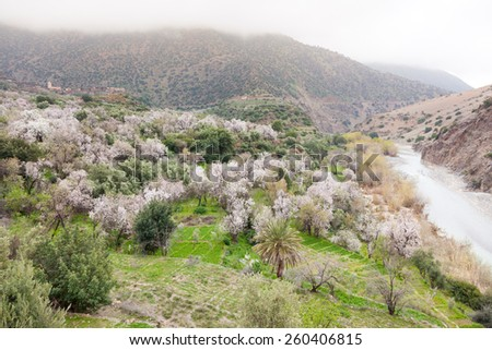 North african mountain valley in springtime. Green meadow, blooming trees, river and small village. High Atlas, Morocco, Africa. - stock photo