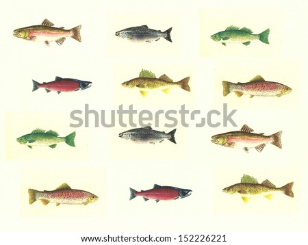 Walleye fish stock images royalty free images vectors for North american freshwater fish