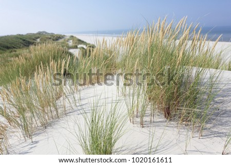 North Sea beach. Dune grass Ameland.