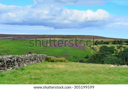 North York moors England - stock photo