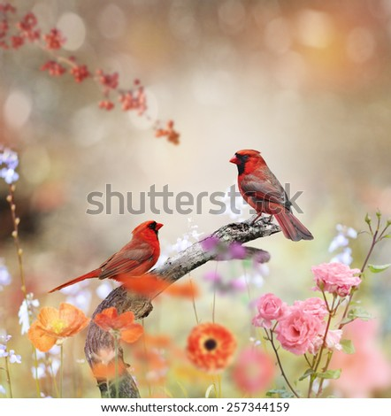 Northern Cardinals Perched In The Garden - stock photo