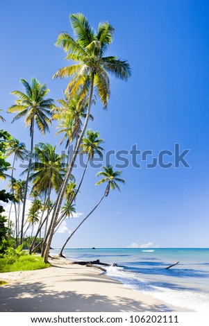Northern coast of Trinidad, Caribbean - stock photo