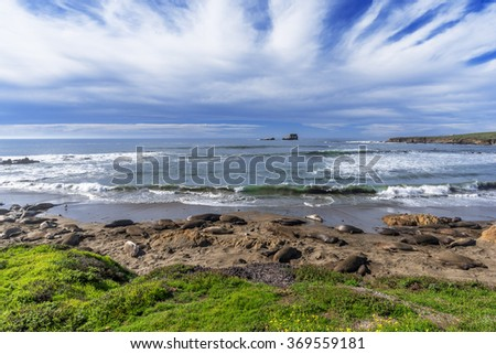 Northern Elephant Seals basking in the sun with aquamarine seas, blue sky & white clouds at a rocky beach, on the rugged Big Sur coastline, near Cambria, CA. on the California Central Coast. - stock photo