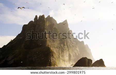 Northern gannets seen on the remote and steep cliffs of St Kilda. The Saint Kilda archipelago contains the largest colony in Europe with more than 60 000 nests - stock photo