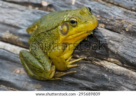 Consider, toads and frogs with webbed feet