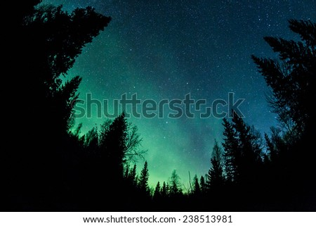 Northern lights (Aurora Borealis) above a forest - stock photo