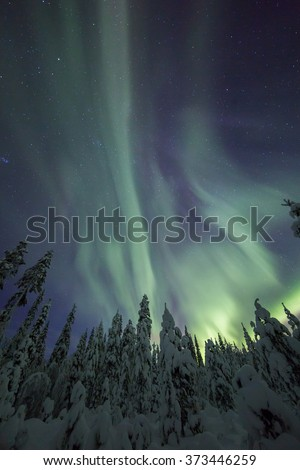 Northern lights (aurora borealis) over a winter forest in Lapland - stock photo