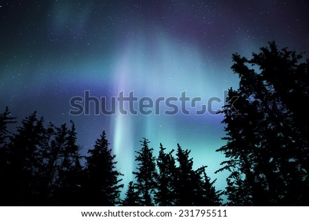 Northern lights in Southeast Alaska with the silhouette of spruce trees. - stock photo