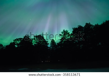 Northern lights over trees in Sweden (Aurora borealis) - stock photo