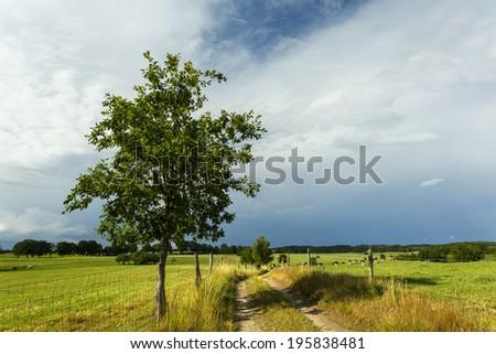 Northern Poland./ Farm Road  - stock photo
