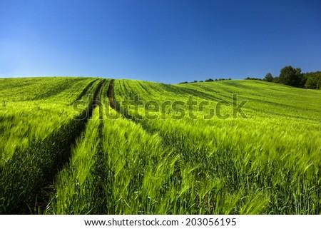 Northern Poland. / Field. - stock photo
