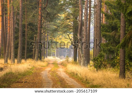 Northern Poland./ Road in the forest.