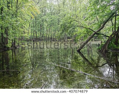 Northern swamp wetland - stock photo