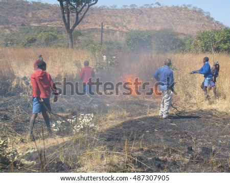 Norton,Zimbabwe,September 28  2014.   A  group of school  boys use  tree  branches  and  sticks  to  fight  a  veld  fire  outside their school yard.Bush  fires  are  common  in  Africa.