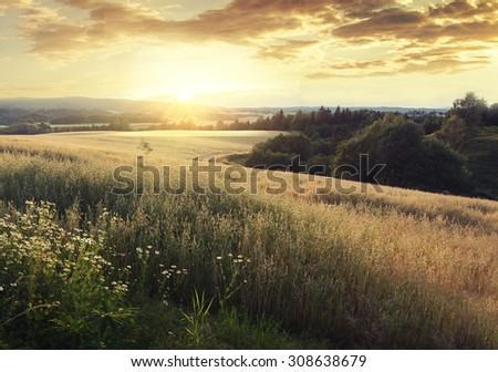 Norway summer Landscape with Wheat Field and Clouds at sunset (sunrise). Sunshine over the village. Vintage effect. - stock photo