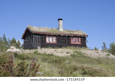 Norwegian cabin with sheep (Blahoe moutain, Vagamo, Norway). The roof has insulation with vegetation. - stock photo